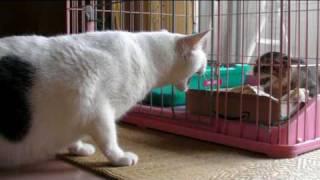 getlinkyoutube.com-子猫が我が家にやってきた