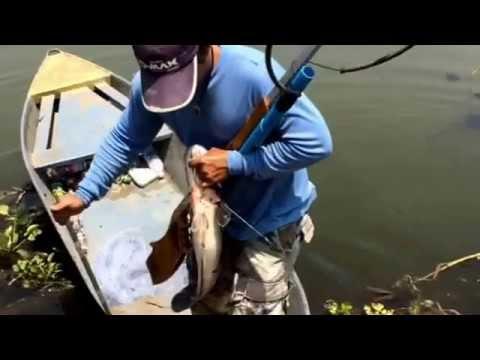 ปืนยิงปลาช่างเอกลพบุรี