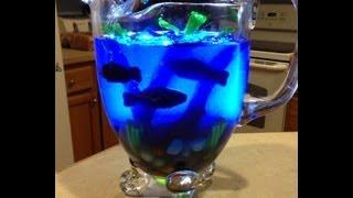 getlinkyoutube.com-Fish Bowl Jello