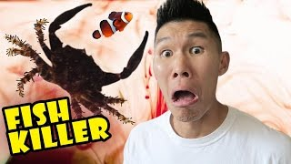 getlinkyoutube.com-FISH KILLER CRAB CAUSES AQUARIUM DISASTER - Life After College: Ep. 504