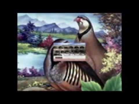 Mardin Savur Sait San 2012 Video Klip  0535 782 18 46 -- 0535 047 67 56