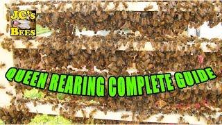 getlinkyoutube.com-Grafting Queen Honey Bees (Queen Rearing)