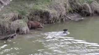 getlinkyoutube.com-pups boar-listen carefully,very funny