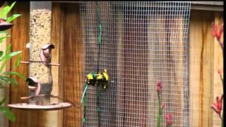 squirrel zap
