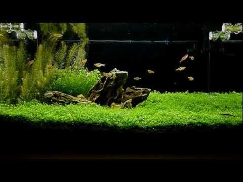 60L planted tank