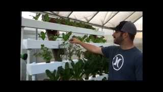 getlinkyoutube.com-Hydroponic NFT with Bucket System / Dutch Bucket
