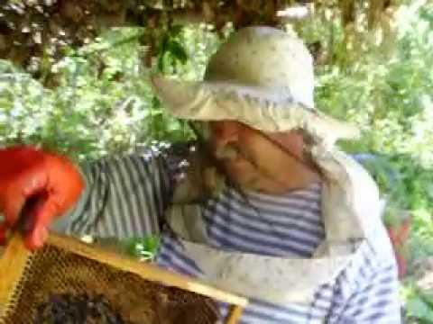 откачка мёда 2010.养蜂业