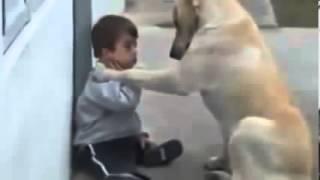 getlinkyoutube.com-فيديو ابكى العالم... الكلب والطفل المعاق ذهنيا