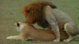 getlinkyoutube.com-سكس حيوانات ـ 2009