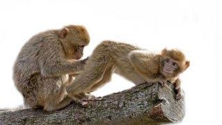 getlinkyoutube.com-FUNNY GIF COMPILATION - NEW FUNNY ANIMAL VINES AND GIFS