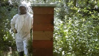 getlinkyoutube.com-Tallest & Strongest Bee Hives or Colonies In the World / Using the Rose Hive Method Part 2
