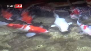 getlinkyoutube.com-Inilah Taman Kolam Ikan Hias Indah Dalam Rumah