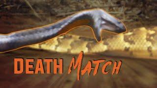 getlinkyoutube.com-Deadly Snake Fight!