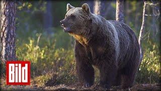 getlinkyoutube.com-Mann schreit Bär weg - Angriff aus dem Wald