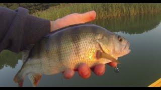 getlinkyoutube.com-Okoń na spinning 2015 / łowienie okoni na jeziorze / przynęty na okonia