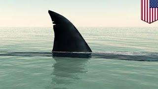 getlinkyoutube.com-サメに頭をひれで打たれ、脚かまれる 米フロリダ州で女性重傷