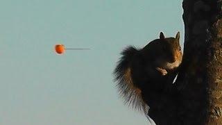getlinkyoutube.com-Blowgun Hunting Ep. 4 - The Squirrels Still Fear Us!