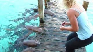 getlinkyoutube.com-azimut trip  snorkeling plane crash shark feeding deep sea hid light
