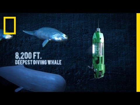 Long Way Down: Mariana Trench