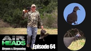 Dove and guineafowl shooting - AirHeads episode 64