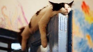 getlinkyoutube.com-Lustige Katzen Schlafen im komisch ( Weird ) Positionen Compilation 2014 NEU HD