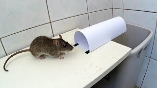 getlinkyoutube.com-paper mouse trap