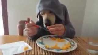getlinkyoutube.com-Ты   не ты, когда голоден