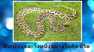getlinkyoutube.com-ฝันเห็นงูและวิ่งหนีงูไม่คิดชีวิต