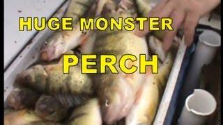 getlinkyoutube.com-HUGE MONSTER YELLOW PERCH FISHING