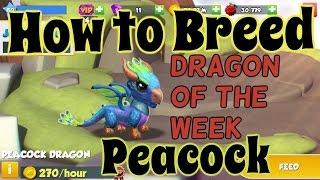 getlinkyoutube.com-How to Breed Peacock Dragon Mania Legends