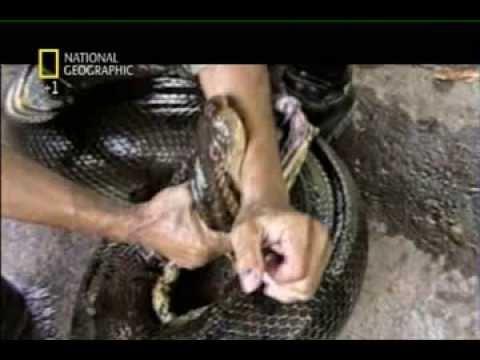 Documentario National Geographic - Serpenti Giganti