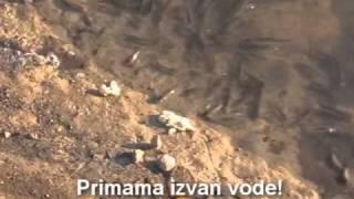 getlinkyoutube.com-Fider primama - ribolov (Feeder)