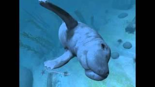 getlinkyoutube.com-Ocean Rift (Vive) Comfort Mode Swimming