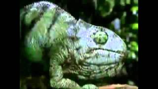 getlinkyoutube.com-Budweiser Frogs Commercials (1995-2001)