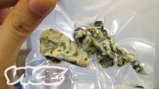 getlinkyoutube.com-The Rise of Psychedelic Truffles in Amsterdam