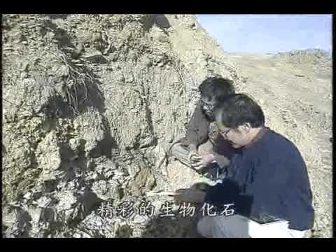 世紀之謎—鳥的起源與演化(上) - YouTube
