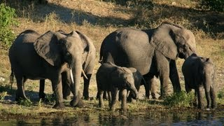 getlinkyoutube.com-Chobe National Park: Botswana