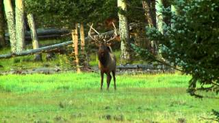 getlinkyoutube.com-Will Primos Shoots a Big Elk with his Sharps 45-70 Rifle