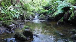 Nature Sounds & Classical Piano Music-Sound of Water & Birds Singing-Johnnie Lawson