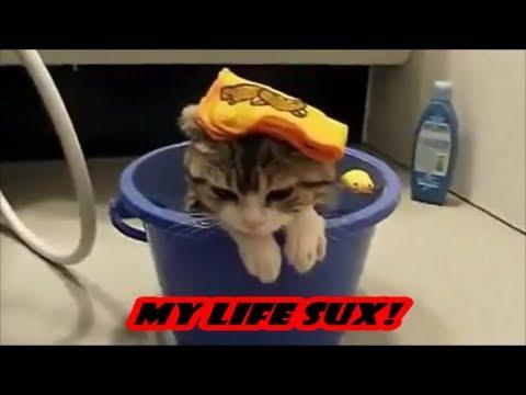 funny cats new compilation , nowe smieszne koty