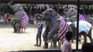 Elephant Show, Nong Nooch Tropical Gardens, Pattaya, Thailand