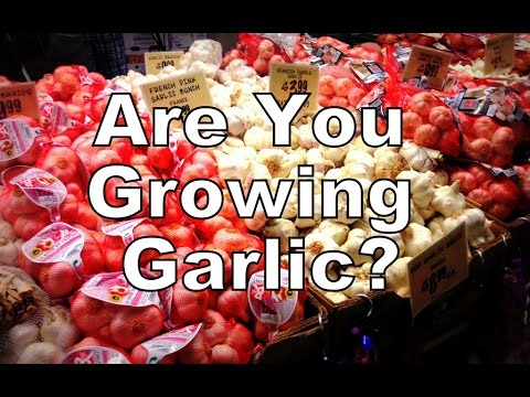 Are you Growing Garlic?