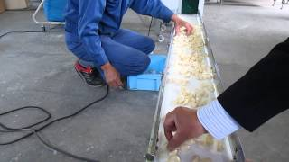 getlinkyoutube.com-Garlic Peeling Machine 01 by PF MAX COMPANY