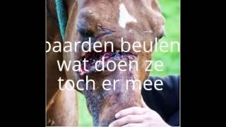 horses xxxx