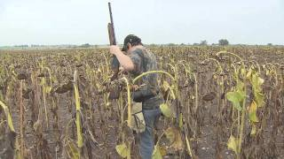 getlinkyoutube.com-Nooner Ranch Dove hunting