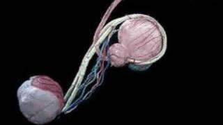 getlinkyoutube.com-Cirurgia de Vasectomia em 3D - Cirurgia sem dor