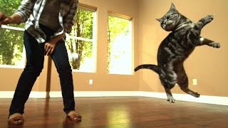 getlinkyoutube.com-Awesome Cats In Slow Motion (1,500fps)