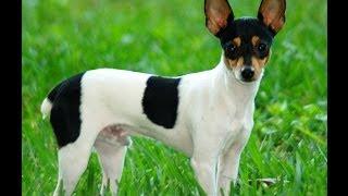 getlinkyoutube.com-Top 10 Hunting Dog Breeds