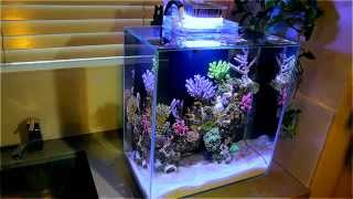 getlinkyoutube.com-Fluval Edge 12g Nano Reef