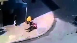 getlinkyoutube.com-Perros Defienden a su dueño de pandilleros Dogs defend their own.